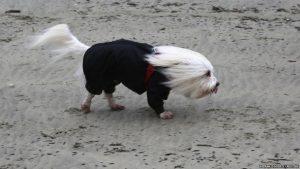 headwinds dog
